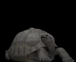 亀 人間 年齢