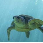 亀が水中にばかりいる・・・。日光浴は大丈夫?