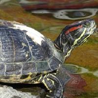 水温 高い 低い 亀