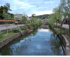 亀 日本 種類 川