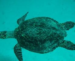 亀 海 種類
