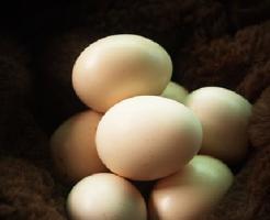 亀 卵 味