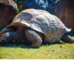 亀 大きさ 年齢