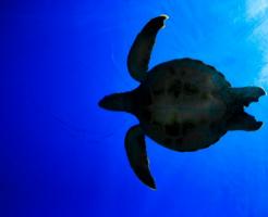 ウミガメ リクガメ 違い