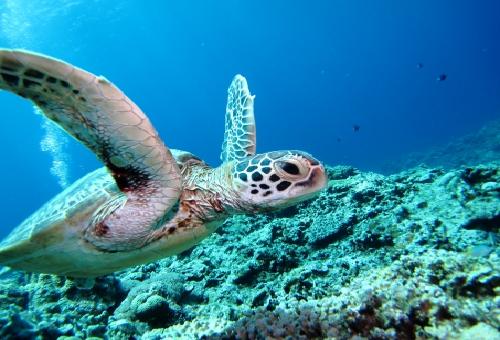 ウミガメ 呼吸 方法 時間
