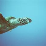 ウミガメが絶滅したら生態系にどんな影響がある!?
