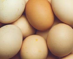 亀 卵 孵化 方法