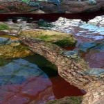 カメ池の簡単な排水方法