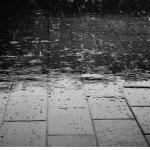 亀に日光浴させたいけど・・・。曇りや雨の時はどうすればいい?