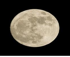 亀 産卵 満月