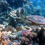 ハワイや宮古島で見られる海亀が見られる時期は?