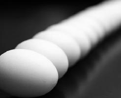 亀 数 卵 育て方