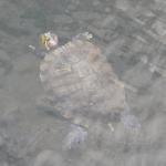 ミドリガメが水中に潜ってられる時間ってどれくらい!?