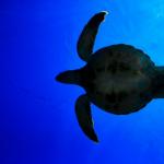 ウミガメとリクガメの違いについて !