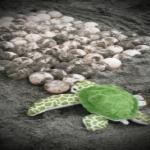 ウミガメの卵の数や殻の特徴について!